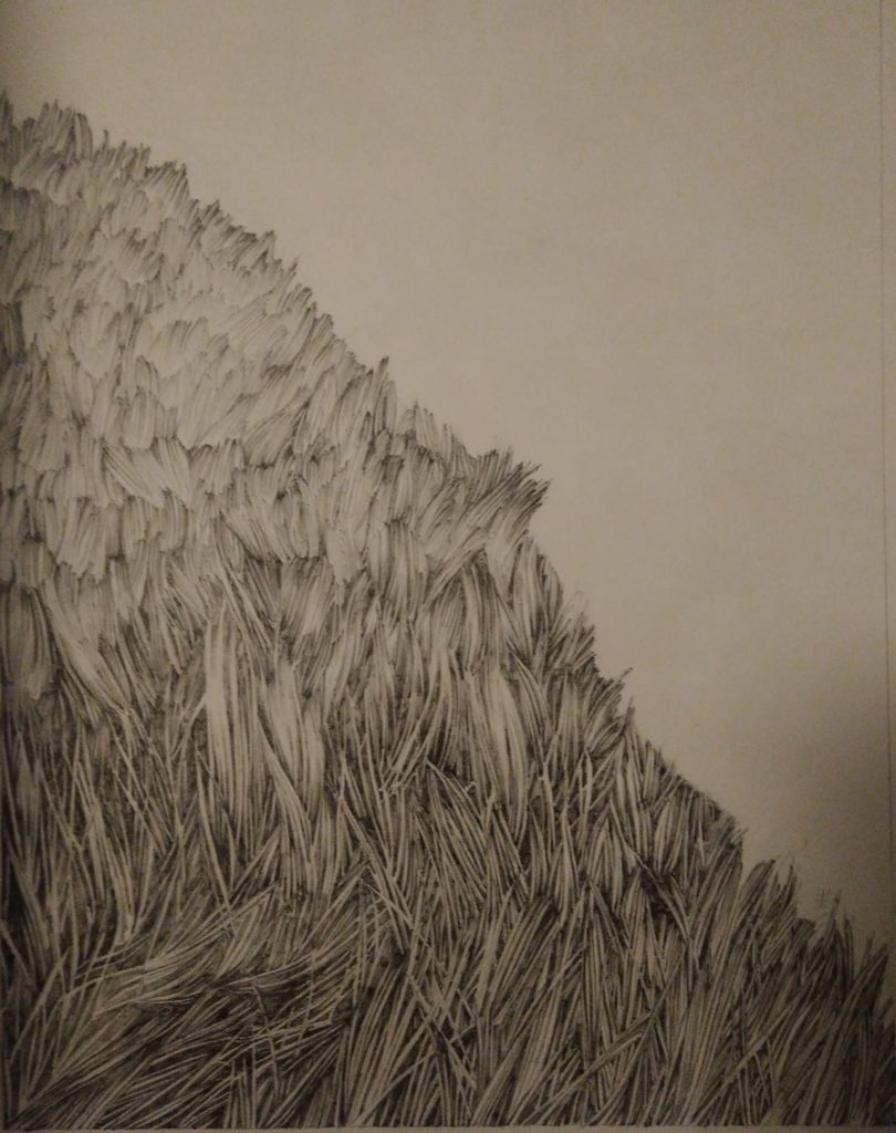 Mountain, herbs, ink, paper, black, white