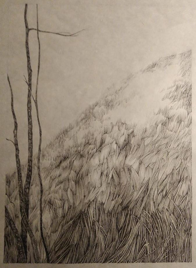 Baum, Wiese, Feld, Berg