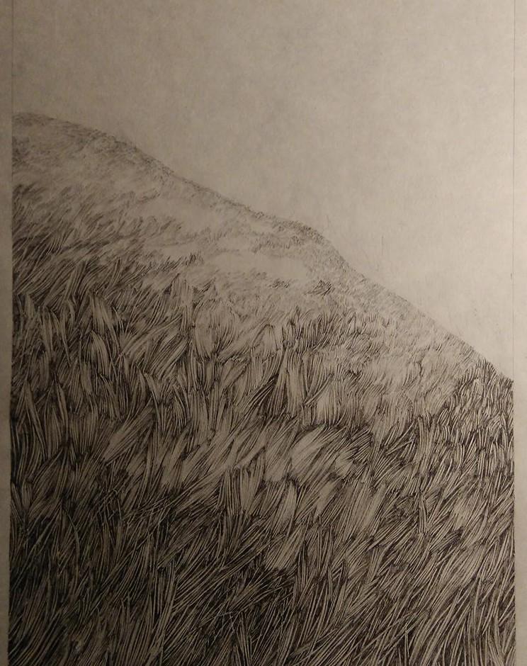 Mountain, herbs, field, nature