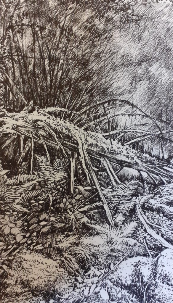 Black Forest, Primary Forest, Emmanuel Henninger, Nature, Environment