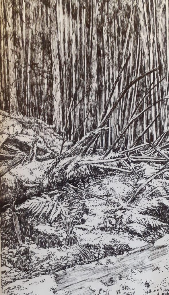 Emmanuel Henninger, Black Forest, Nature, Environment