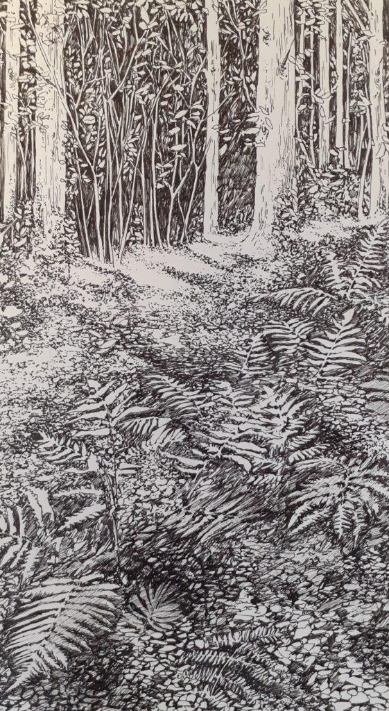 Emmanuel Henninger, Forêt-Noire, Forêt, nature, environnement, primaire