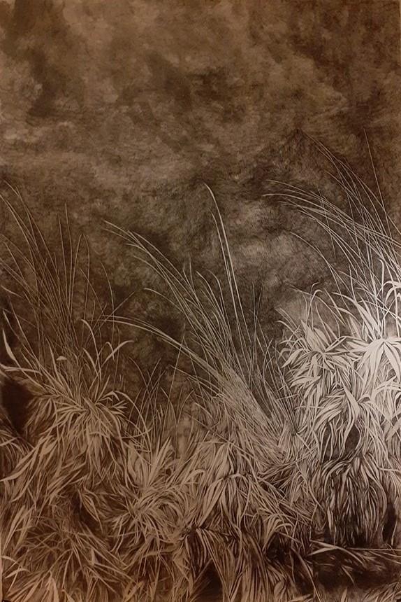 Emmanuel Henninger, Graminées, herbes, nature, forêt, chaumes, vosges