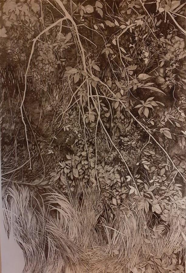 Emmanuel Henninger, Sous-bois, Bure, Biosphère, écosystème, forêt