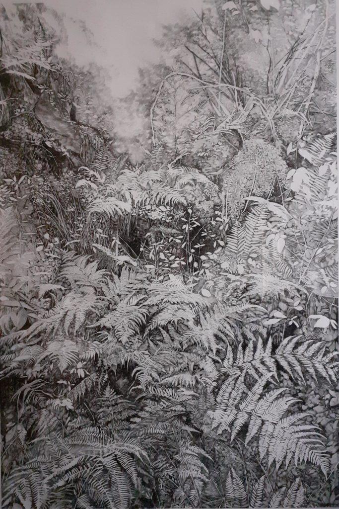 Emmanuel Henninger, Schwarzwald, Biodiversität, Farne