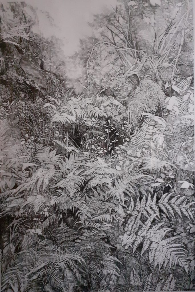 Henninger Emmanuel, Primary Forest, Biodivesity, Protect, Woods