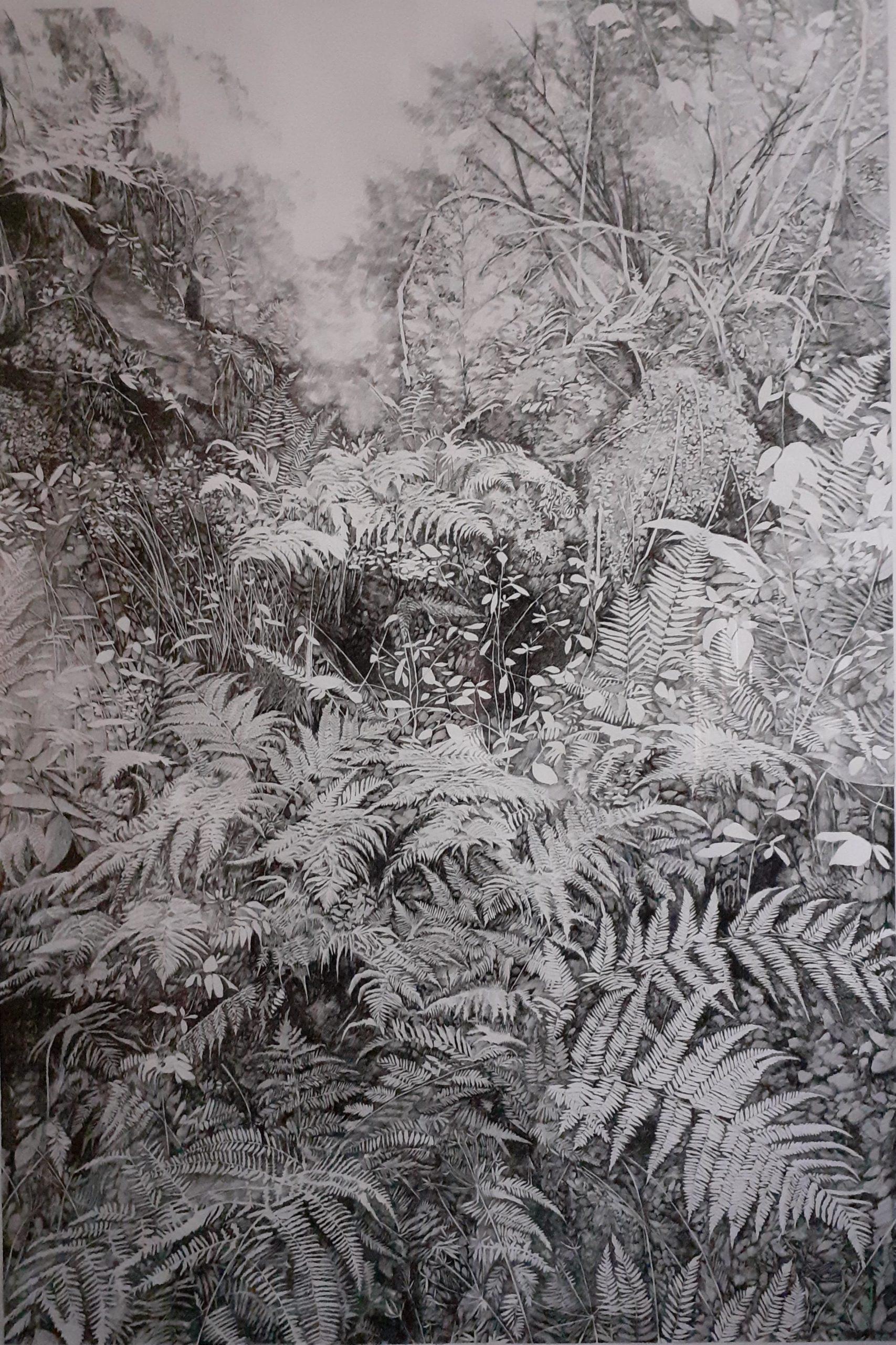 Henninger Emmanuel, fougères, forêt primaire, Forêt Noire, biodiversité, environnement, nature