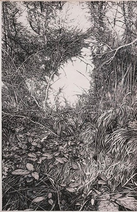 Wood, Henninger Emmanuel, Forêt, Hardt, Rhy, Rhein, Rhin, botanist, jardin, trees, graphic, sauvage