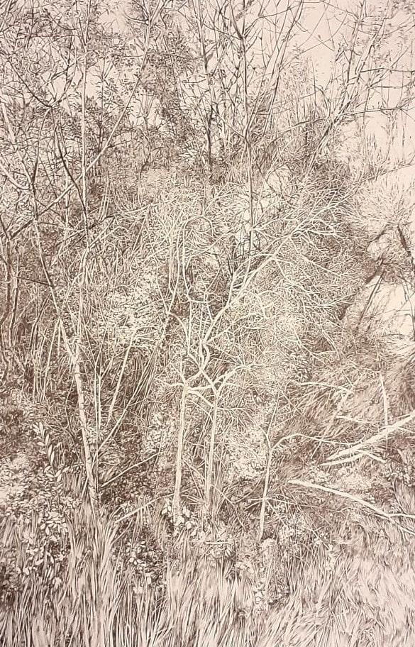 Emmanuel, Henninger, Art, Contemporary Art, Drawings, Ink, Paper, Forest, European Forest