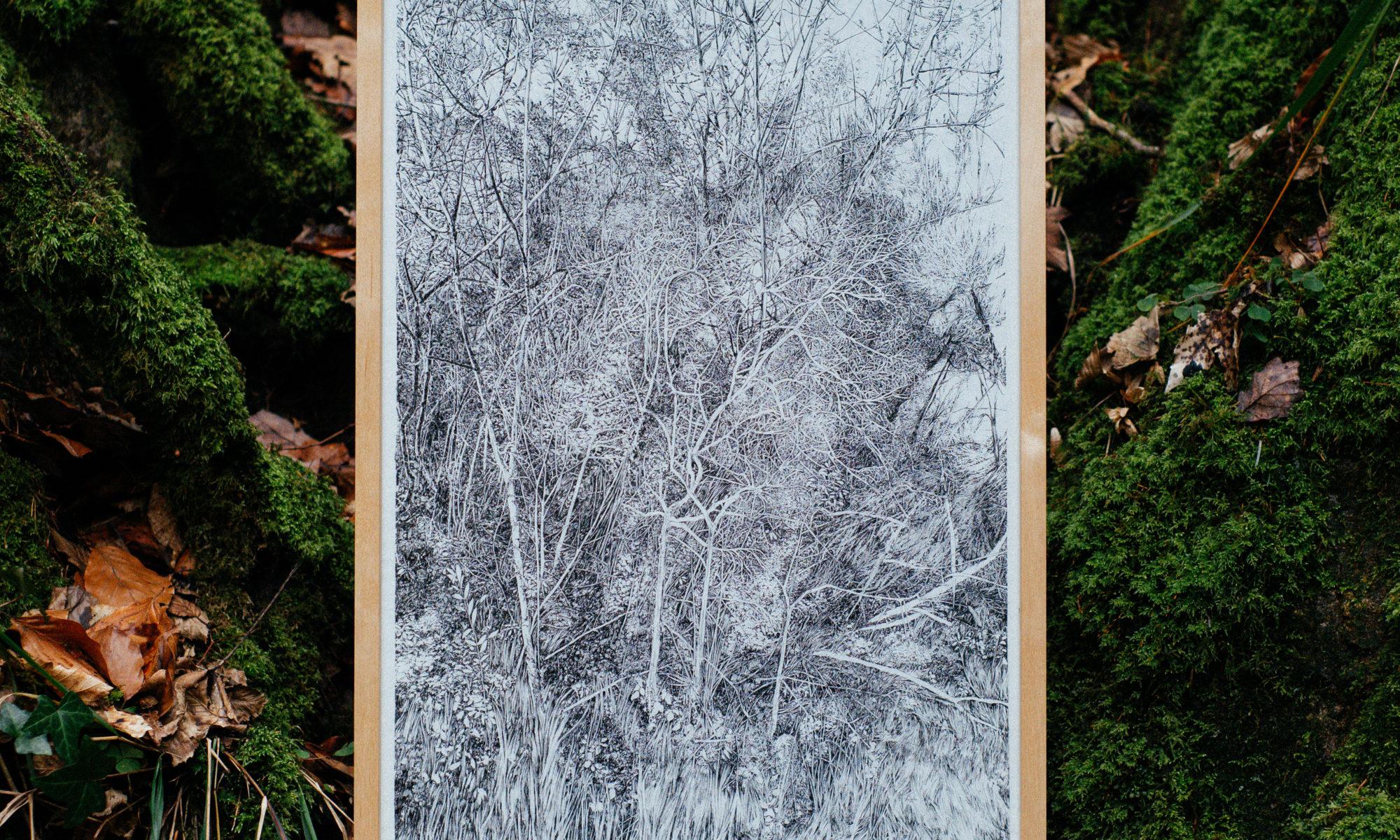 Emmanuel Henninger, dessin, forêt, allemagne