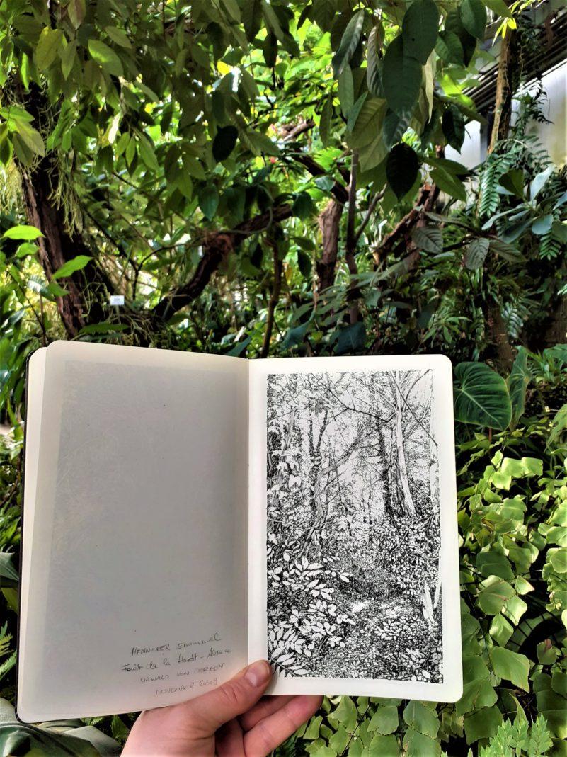 Emmanuel, Henninger, Botanical, Art, Drawing