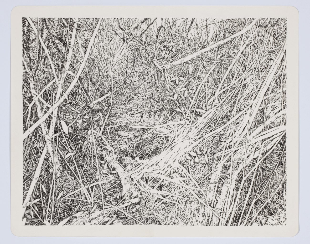 Emmanuel Henninger, Art, French, Forest, Black and White, Ink, Territories, Contemporary art, Jungle