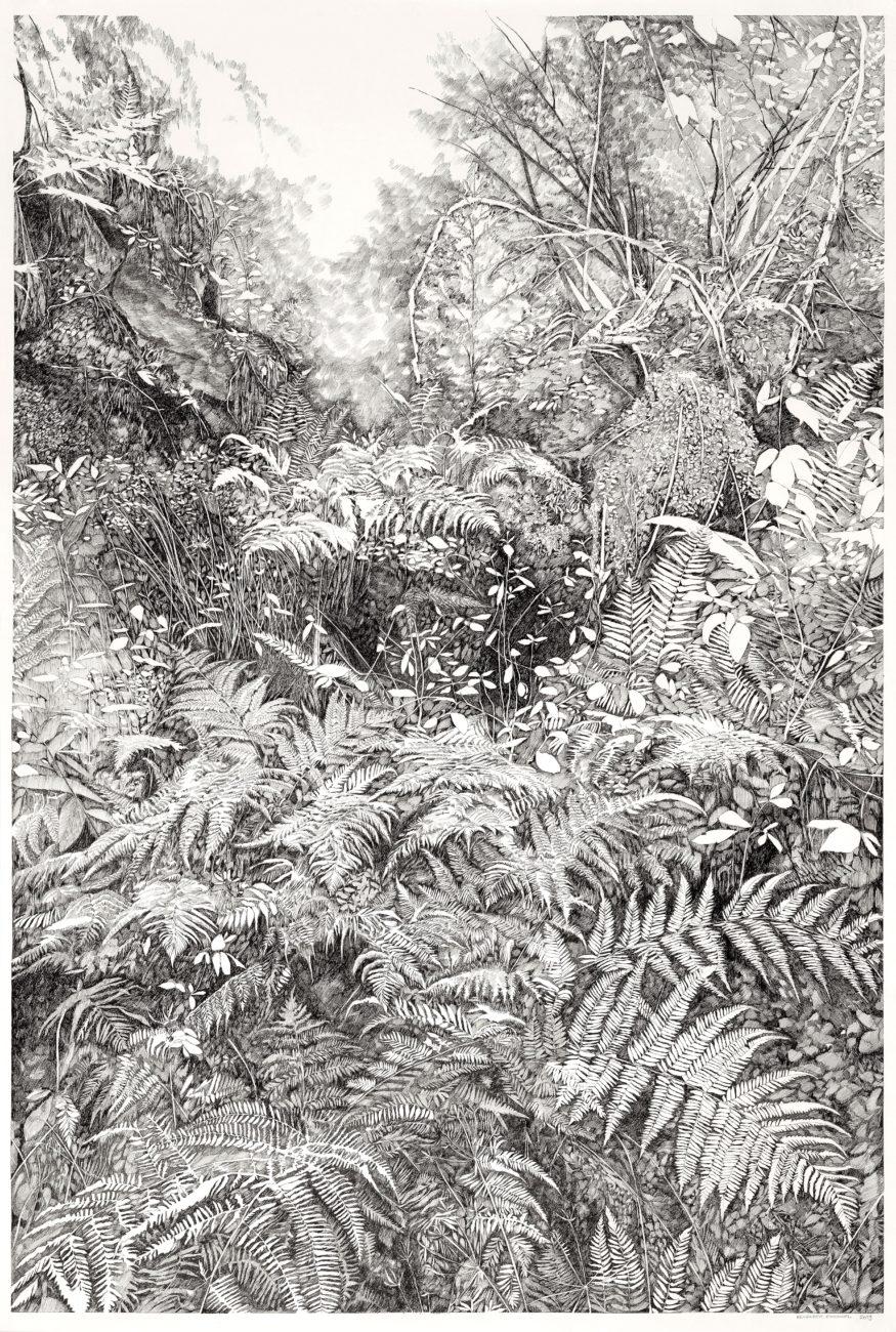 Urwald, henninger, simonswald, arbres, fougères, dessin, art, local, paysage