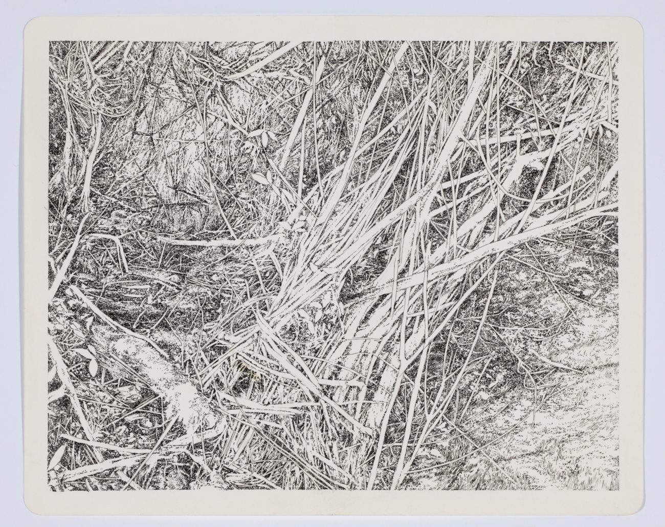 Emmanuel Henninger, Art, French, Forest, Black and White, Ink, Territories