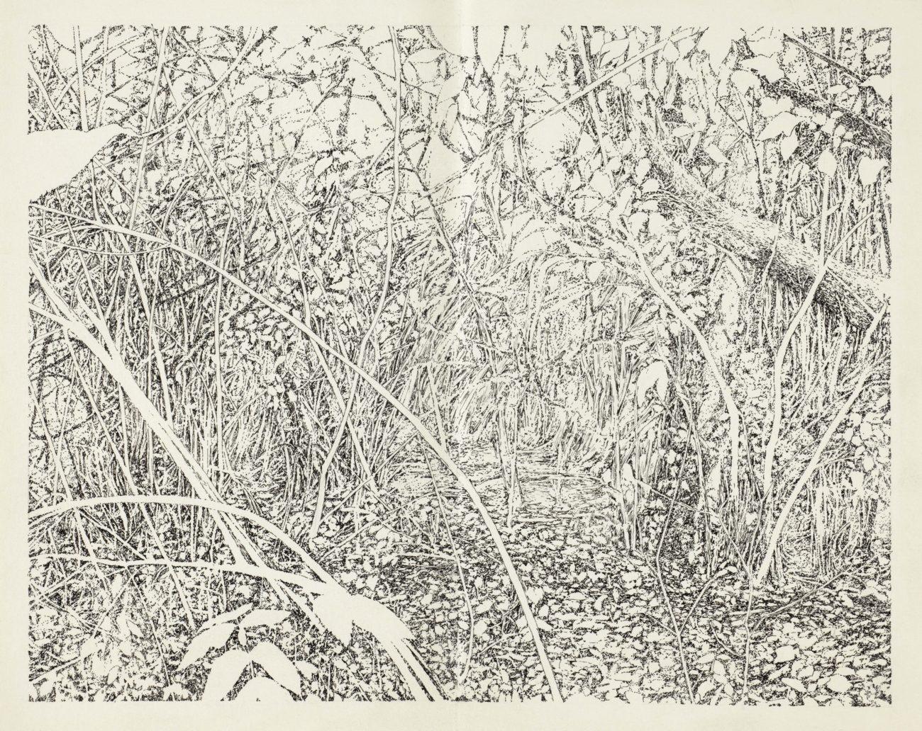 Forêt, Hardt, Emmanuel Henninger, Henninger, dessin, art, noir, blanc, réalisme, alsace, artiste