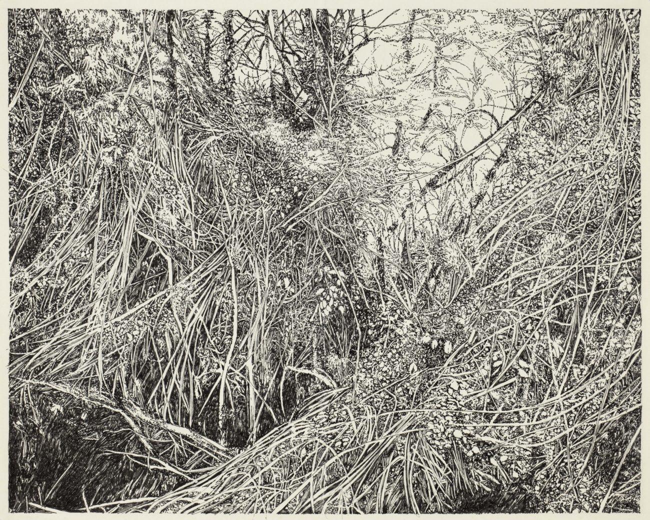 Forêt, art, dessin, henninger, emmanuel, art, nature, arbre, alsace, artiste