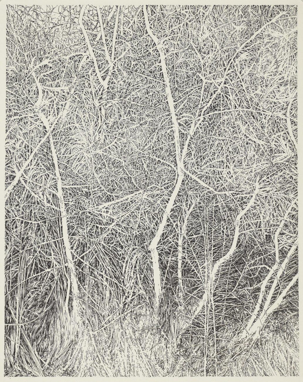 Cospudenersee, forêt, art, dessin, allemagne, henninger, emmanuel, artiste, paysage, portrait