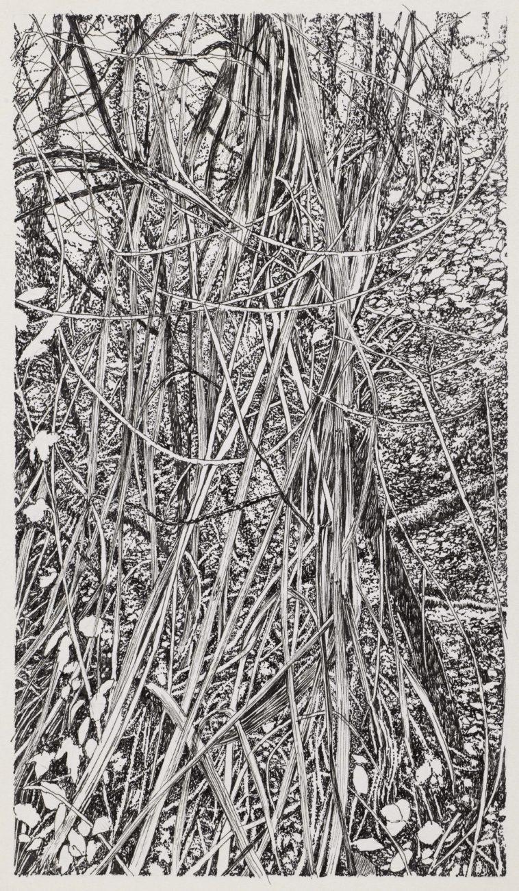 Henninger emmanuel, art, dessin, encre de chine, alsace, france, allemagne, artiste, forêt