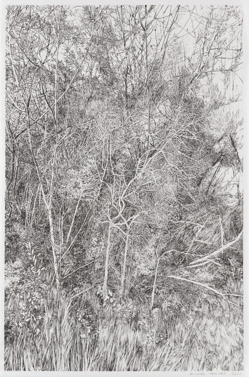 Botanica, henninger, art, forest, ink, drawing, french, german, nature, environment, fondation