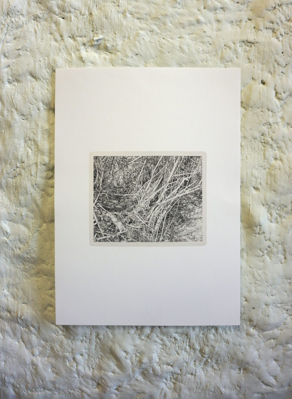 Multiples, reproduction, shop, nature, environnement, print, henninger, emmanuel, france, art, artiste