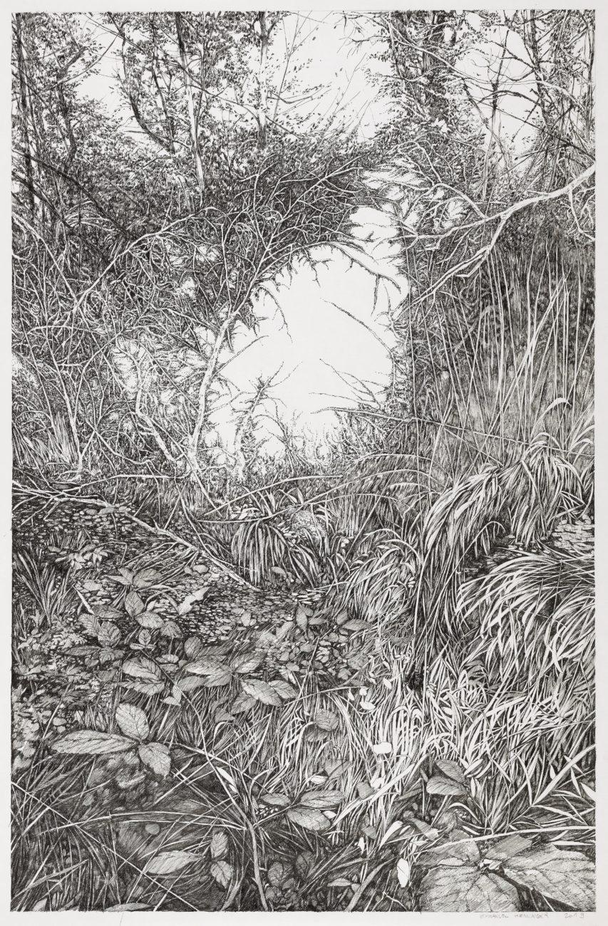 wood, henninger, art, ink, forest, hardt, dessin, landscape, portrait, artiste, french, dessin, drawing